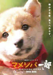 連続テレビドラマ マメシバ一郎 DVD-BOX/佐藤二朗[新品]